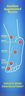 Aspercreme Lidocaine Foot Cream 4 oz by Chattem